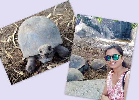Turtles_seychelles